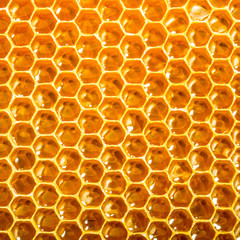 Close up view of honeycells.