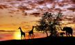 Fototapeten,afrika,tier,elefant,landschaft