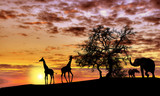 Fototapety African sunset