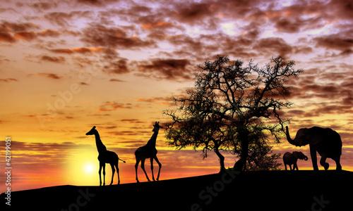 Fotobehang Zonsondergang African sunset