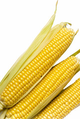 Corn ear isolated on a white background