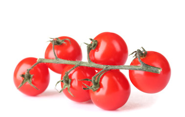 Beautiful cherry tomatoes on a branch isolated on white