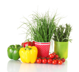 fresh green rosemary and onion in cups, paprika, tomatoes