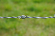 horizontal picture of barbed wire in meadow