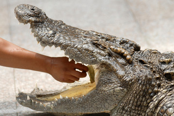 play with crocodile