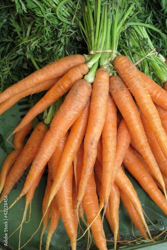Karotten - Möhren