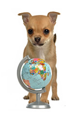 Puppy with globe
