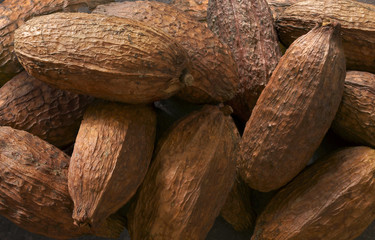 Cabosse del cacao