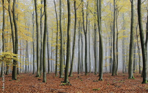 Foto op Canvas Bos in mist misty autumn