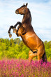 Bay horse rearing up on floral background