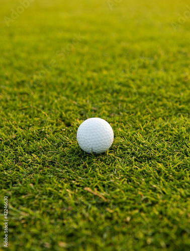 Golf ball on the field close-up
