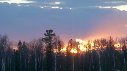Taiga at sunset (Siberia)