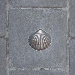 Coquille Saint -Jacques (Chaussée à Bruges)