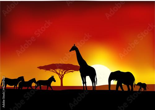Fototapeten,akazie,afrika,tier,baby