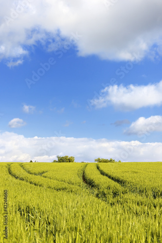 Tractor tracks through wheat fields in Rouhling