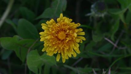 flowers awaken timelapse