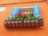 blumenfenster in burano