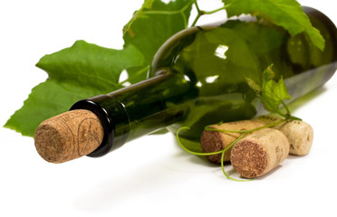 wine bottle and a vine