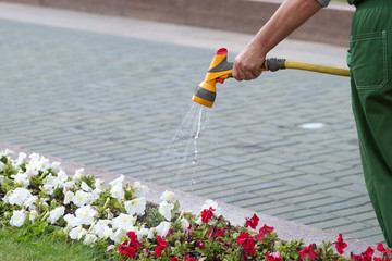 Gardener in coverall watering the flowers from hose