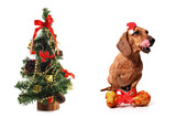 Canine Christmas poster