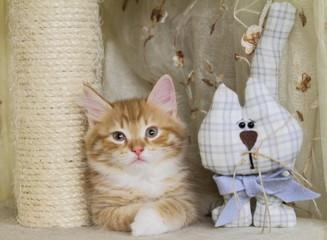 Gattino e pupazzo sul tiragraffi