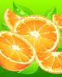 Oranges with leaves on green