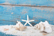 Muscheln - Strandgut mit Hintergrund