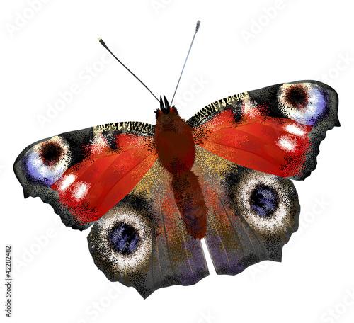 Fotobehang Vlinder illustration of European Peacock butterfly