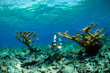 Woman snorkeling in tropical destination