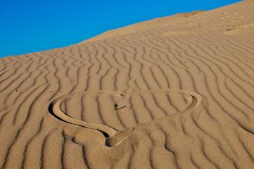 Dünenwüste