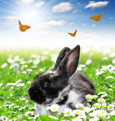 Cute Rabbit with butterflies in grass