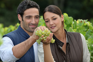 Winemakers with grapes