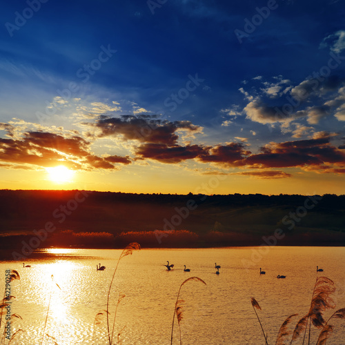 dramatic sunset over river with swans