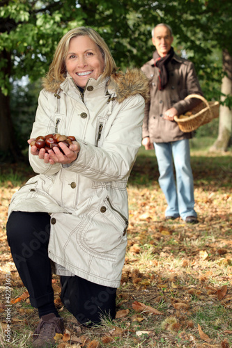 Middle aged couple picking chestnut.