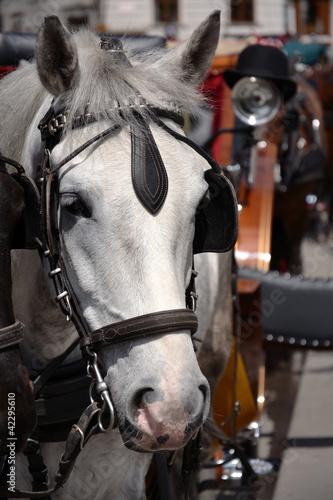 Horse in Vienna