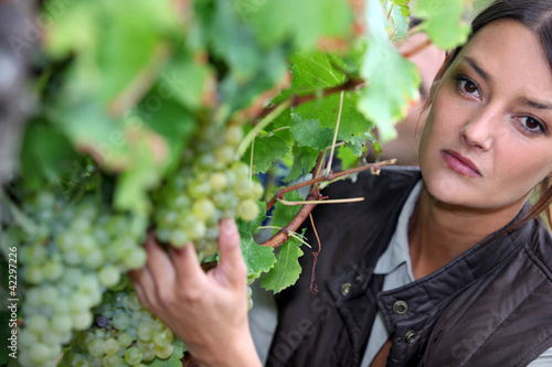Closeup of woman looking at grapes in a vineyard