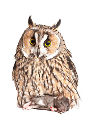 owl with pray isolated on the white background