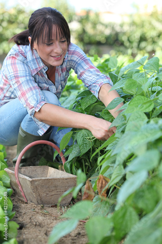 Woman picking vegetables