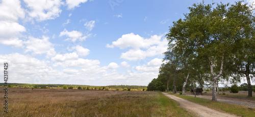 Panorama Lüneburger Heide mit Kutsche