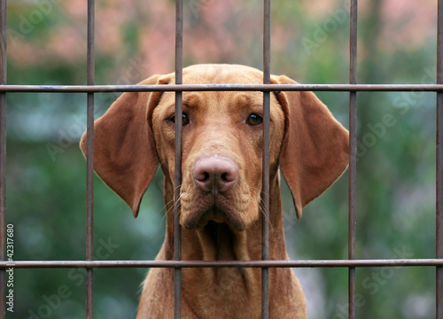 Homeless dog behind a fence