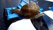 snail on toy car