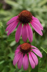 fiori 1482