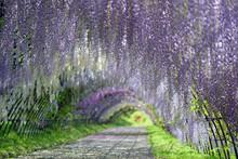 Arche de fleurs 花 の ア ー チ