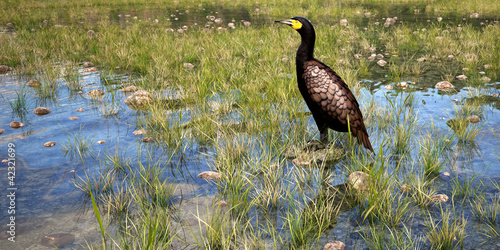 cormorant in natural environment 3d rendering