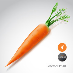 Carrot isolated on white background, vector Eps10 image