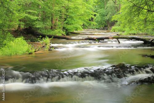 "Reserve ""Nad Tanwia"", Tanew River, Roztocze."