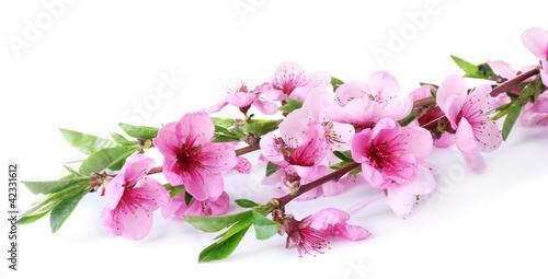Fototapeten,schön,rosa,pfirisch,blühen