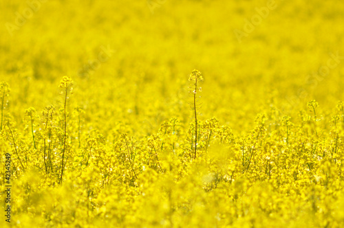 Bight yellow flowers