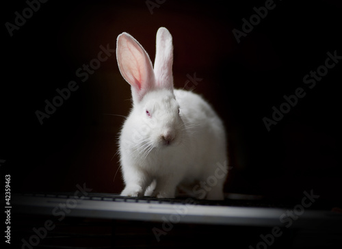 white rabbit on black low key