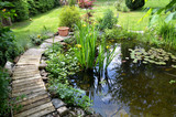 Garten Teich Seerosen
